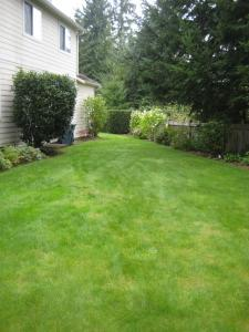 a beautiful Concord lawn maintained with a sprinkler system